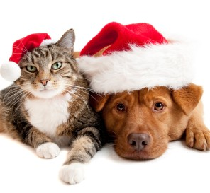 dog-cat-christmas-e12915068675032.jpg